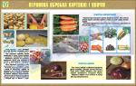 """Плакат """"Первичная обработка картошки и овощей"""""""
