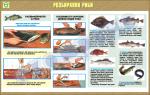 """Плакат """"Розбирання риби"""""""