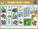 """Плакат """"Нарізання картоплі і овочів"""" код 4530602"""