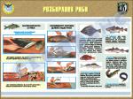 "Плакат ""Розбирання риби"" код 4530610"