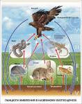 Ланцюги живлення в наземному біогеоценозі  4590209