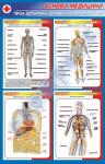 """Плакат """"Основы анатомии и физиологии человека"""""""